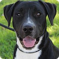 Adopt A Pet :: ANDY - Red Bluff, CA