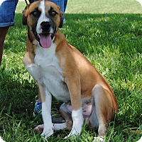 Adopt A Pet :: Xavier - Parsons, KS