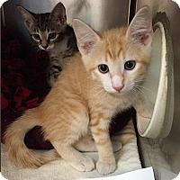 Adopt A Pet :: Cromwell - Lakewood, CO