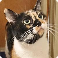 Adopt A Pet :: Princess Diana - Salisbury, MA