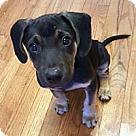 Adopt A Pet :: Orphan Smittie
