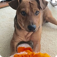 Adopt A Pet :: Tucker - Huntsville, AL