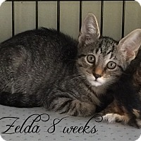 Adopt A Pet :: Zelda - Island Park, NY