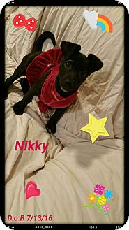 Pug/Dachshund Mix Puppy for adoption in LAKEWOOD, California - Nikky