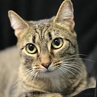 Adopt A Pet :: Egypt 161462 - Atlanta, GA