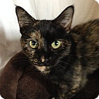 Adopt A Pet :: Abigail - Simpsonville, SC