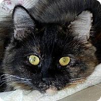 Adopt A Pet :: Lou Anne - Winchester, CA