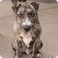 Adopt A Pet :: Sulley - Atlanta, GA