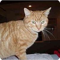 Adopt A Pet :: Cavalier - Hamburg, NY