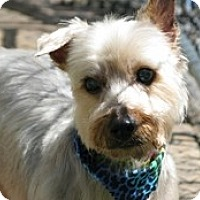Adopt A Pet :: Sae - Seymour, CT