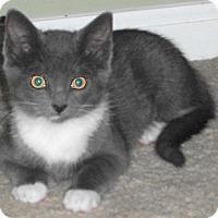 Adopt A Pet :: Suzanna - Colmar, PA
