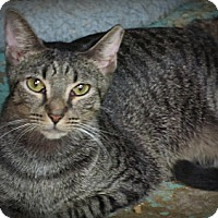 Adopt A Pet :: Einstein - Seminole, FL