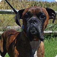 Adopt A Pet :: Tyson - Medora, IN