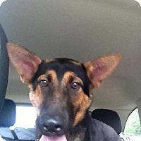 Adopt A Pet :: Keno - Laingsburg, MI
