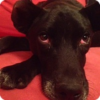 Adopt A Pet :: Oreo - Hixson, TN