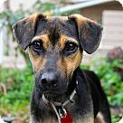 Adopt A Pet :: Sid - Costa Rica