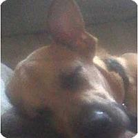 Adopt A Pet :: Otis - Cleveland, OH