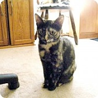 Adopt A Pet :: Azalea - McHenry, IL