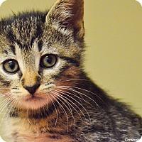 Adopt A Pet :: Justice - Island Park, NY