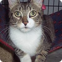 Adopt A Pet :: Rayray - brewerton, NY
