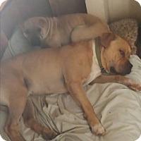 Adopt A Pet :: Hayes - pending - Mira Loma, CA