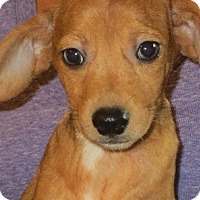 Adopt A Pet :: Mateo - Westport, CT