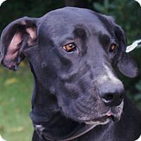 Adopt A Pet :: Xena - Baden, PA