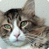 Adopt A Pet :: Neil Sedaka - St. Louis, MO