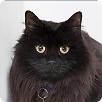 Adopt A Pet :: Ebony - San Luis Obispo, CA