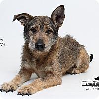 Adopt A Pet :: Mirren aka Casey (Foster) - Baton Rouge, LA