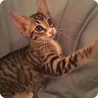 Adopt A Pet :: Tinder 160230 - Atlanta, GA