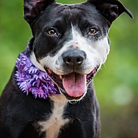 Adopt A Pet :: Allie - Newcastle, OK
