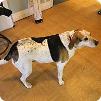 Adopt A Pet :: Ireland - Delaware, OH