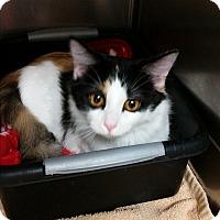 Adopt A Pet :: Momo - Chippewa Falls, WI