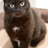 Adopt A Pet :: Cupcake - Philadelphia, PA