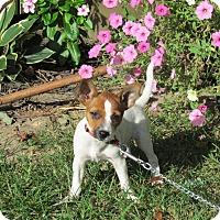Adopt A Pet :: TARA - Hartford, CT