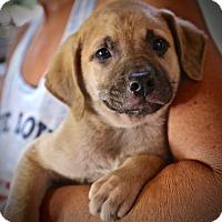 Adopt A Pet :: Billy Joe - Glastonbury, CT