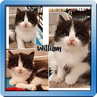 Adopt A Pet :: William - Lutherville, MD
