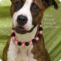Adopt A Pet :: Hooch - Newnan City, GA