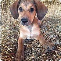 Adopt A Pet :: Bennett - Hamburg, PA