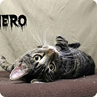 Adopt A Pet :: Hero - Melbourne, KY