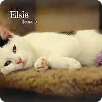 Adopt A Pet :: Elsie - Glen Mills, PA