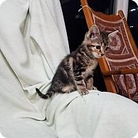 Adopt A Pet :: Arya - Millerstown, PA