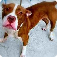 Adopt A Pet :: Charlie Brown - Whites Creek, TN