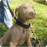 Adopt A Pet :: Smokey- Adoption Pending!!!! - Antioch, IL