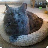 Adopt A Pet :: Smokey - Greenville, SC
