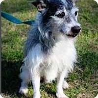 Adopt A Pet :: Elvis - Justin, TX