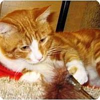 Adopt A Pet :: Hunter - Irvine, CA