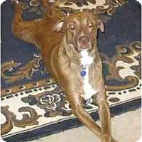 Adopt A Pet :: Hunk (Flagstaff) - Scottsdale, AZ