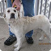 Adopt A Pet :: BLITZEN - Avon, OH
